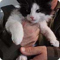 Adopt A Pet :: Bandit - Half Moon Bay, CA