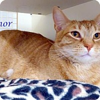 Adopt A Pet :: Connor MacManus - Kansas City, MO