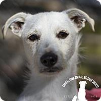 Adopt A Pet :: Luca - Baton Rouge, LA
