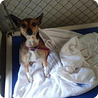 Terrier (Unknown Type, Small) Dog for adoption in Lagrange, Indiana - Lexi
