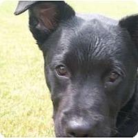 Adopt A Pet :: Pilot - Albany, NY