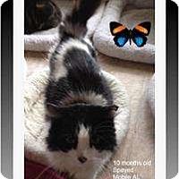 Adopt A Pet :: Cookies & Cream - Mobile, AL