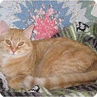 Adopt A Pet :: Pinky - Greenville, SC