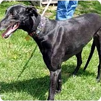 Adopt A Pet :: Emily - Fremont, OH