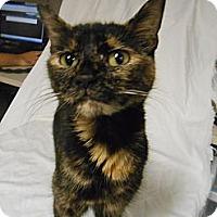 Adopt A Pet :: Arista - Maywood, NJ