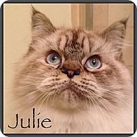 Adopt A Pet :: Julie - Beverly Hills, CA