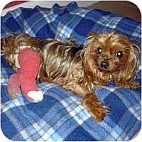 Adopt A Pet :: Patty Cake - Jacksonville, FL