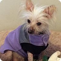 Adopt A Pet :: Violet (NJ) - Gilford, NH
