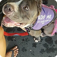 Pit Bull Terrier Mix Dog for adoption in Sacramento, California - Coco