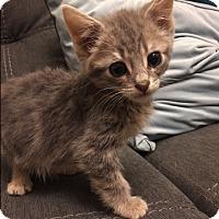 Adopt A Pet :: Dallas - San Ramon, CA