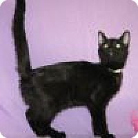 Adopt A Pet :: Nera - Powell, OH