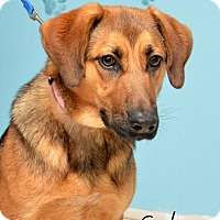 Adopt A Pet :: Sedona aka Lilly - DuQuoin, IL