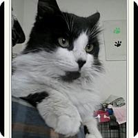 Adopt A Pet :: Zipper - Trevose, PA