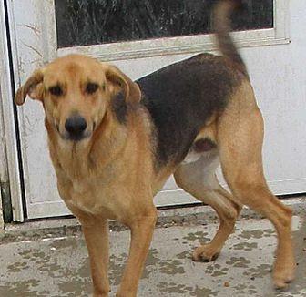 German Shepherd Dog Mix Dog for adoption in Clear Lake, Iowa - Roscoe
