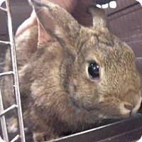 Adopt A Pet :: POPPY - Murray, UT