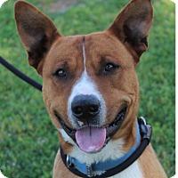 Adopt A Pet :: GILMORE - Red Bluff, CA