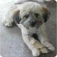 Adopt A Pet :: Stedman - La Costa, CA