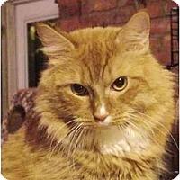 Adopt A Pet :: Hansel - Chesapeake, VA