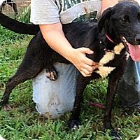 Adopt A Pet :: Casey - Midlothian, VA