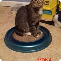 Adopt A Pet :: Mona Marvelous Half Tail - McDonough, GA