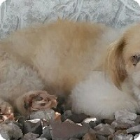 Adopt A Pet :: China - Orlando, FL