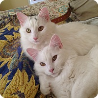 Adopt A Pet :: Piper and Luna - Bear, DE