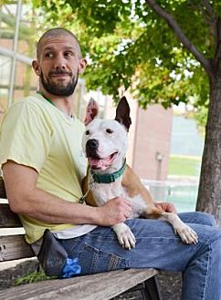 Pit Bull Terrier Mix Dog for adoption in Philadelphia, Pennsylvania - Jacob