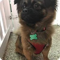 Adopt A Pet :: Alberto - Thousand Oaks, CA
