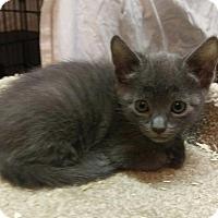 Adopt A Pet :: Leo - Brainardsville, NY