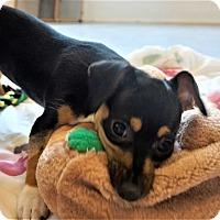Adopt A Pet :: Kyoto - Seattle, WA