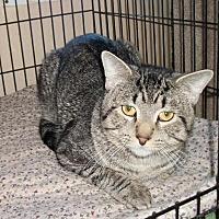 Adopt A Pet :: Murphy - Lacon, IL