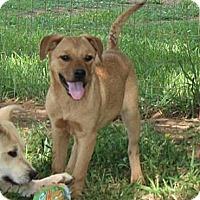 Adopt A Pet :: Mulan - Spring Valley, NY