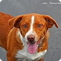 Adopt A Pet :: Emerson - PENDING, in ME - kennebunkport, ME