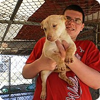 Adopt A Pet :: Melvin - Wallaceburg, ON