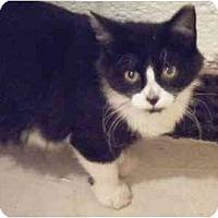 Adopt A Pet :: Chaz - Kensington, MD