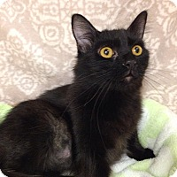 Adopt A Pet :: Sid - Foothill Ranch, CA