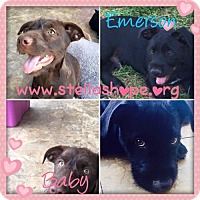 Adopt A Pet :: Emerson & Baby - Costa Mesa, CA