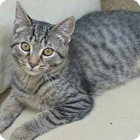 Adopt A Pet :: Lucy - Reston, VA