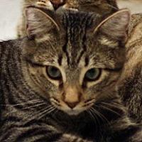 Adopt A Pet :: Pretzel - San Diego, CA