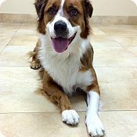Adopt A Pet :: Fluffy - Mission Viejo, CA