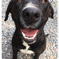 Adopt A Pet :: Kansas - Sanford, NC