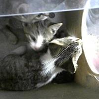 Adopt A Pet :: Mercury - Philadelphia, PA