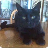 Adopt A Pet :: Templar - Summerville, SC