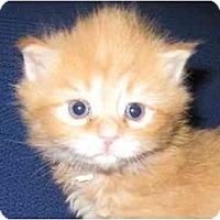 Adopt A Pet :: Spence - Richmond, VA