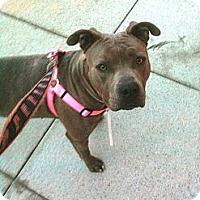 Adopt A Pet :: Princess - Santa Monica, CA