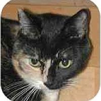 Adopt A Pet :: Half - Portland, OR