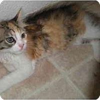 Adopt A Pet :: Papyrus - Davis, CA