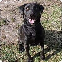 Adopt A Pet :: PENDINGHera - Toronto/Etobicoke/GTA, ON