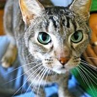 Adopt A Pet :: Allie - Memphis, TN
