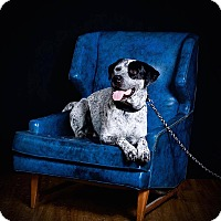 Adopt A Pet :: Cookie - Hillsboro, IL
